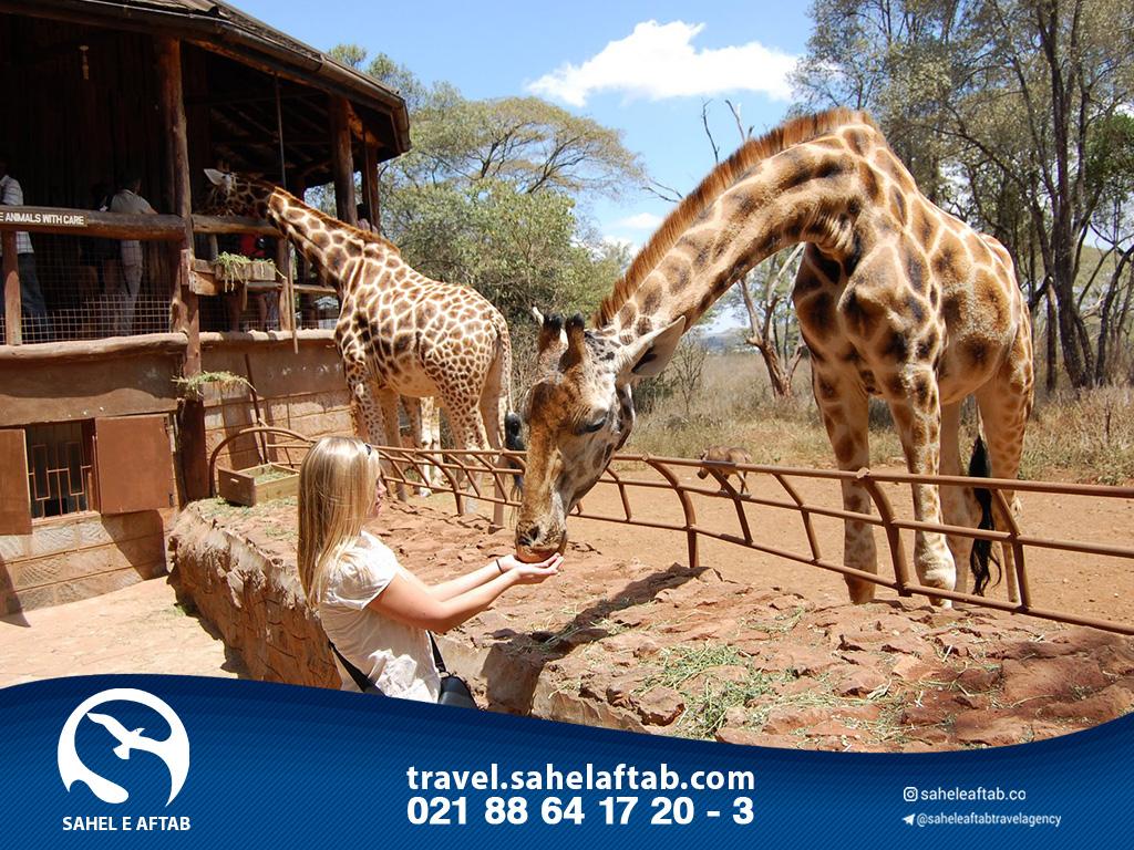 تراول کنیا